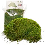 Musgo Estabilizado Premium 500 gr. Color Verde Bosque Ideal para Cuadros Vegetales,...