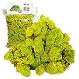 Liquen Preservado Premium 500 gr. Color Verde Manzana (Verde Acido). Uso: Cuadros...